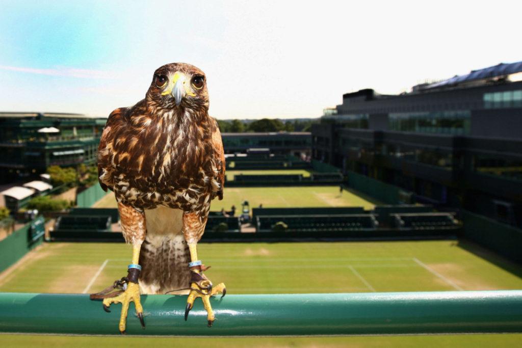 Wimbledon – câteva lucruri interesante despre turneu pe care (poate) nu le ştiai